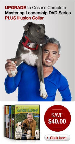 Cesar Millan Dog Bites Leash