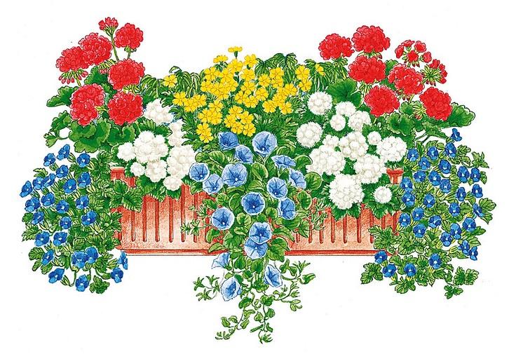 die besten 17 bilder zu balkonk sten blumenk bel auf pinterest balkongarten pflanzenk bel. Black Bedroom Furniture Sets. Home Design Ideas