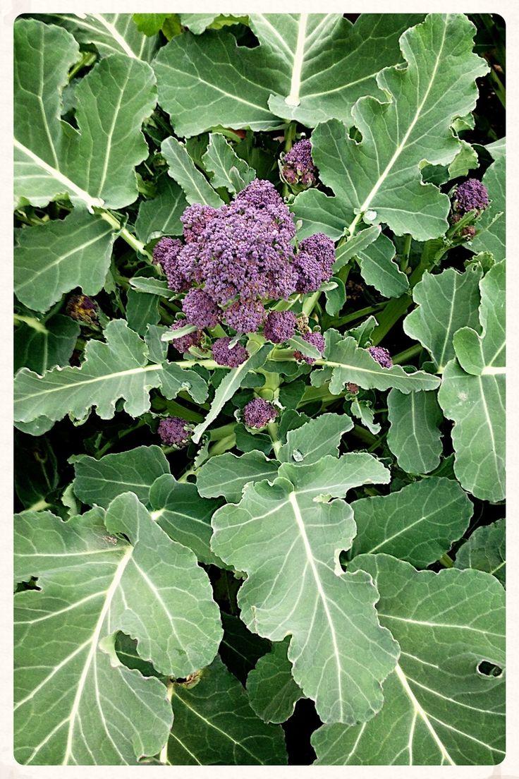 485 best gardening images on pinterest gardening garden ideas