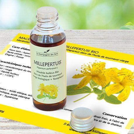 Macérât huileux de Millepertuis BIO en massage pour soulager sciatiques et rhumatismes grâce à son action anti-inflammatoire.