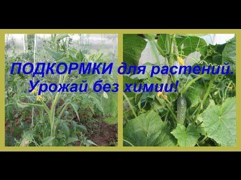 ПОДКОРМКИ для растений. Урожай без химии!