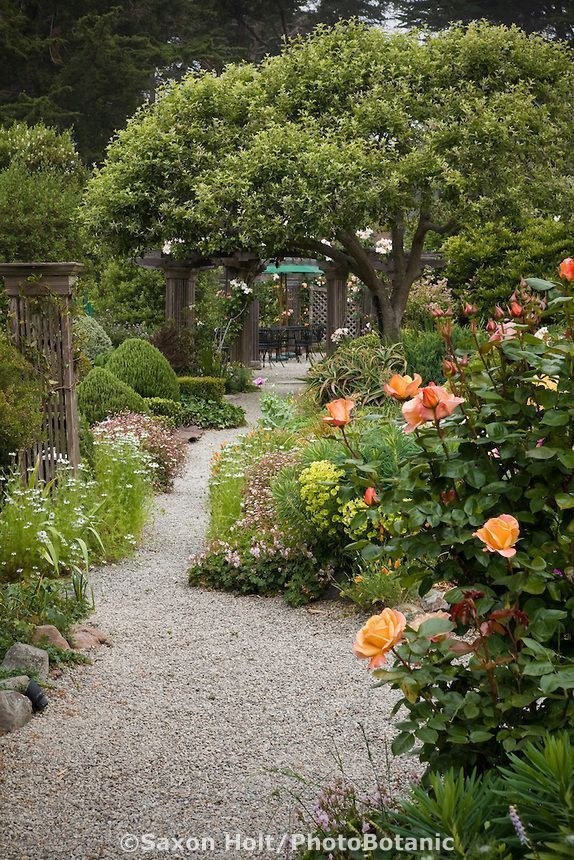 Gravel Pathway In Cottage Garden Under Small Fruit Tree With Rose Country Lady Rt Foreground Sally Robertson Cottage Garden Gravel Pathway Outdoor Gardens