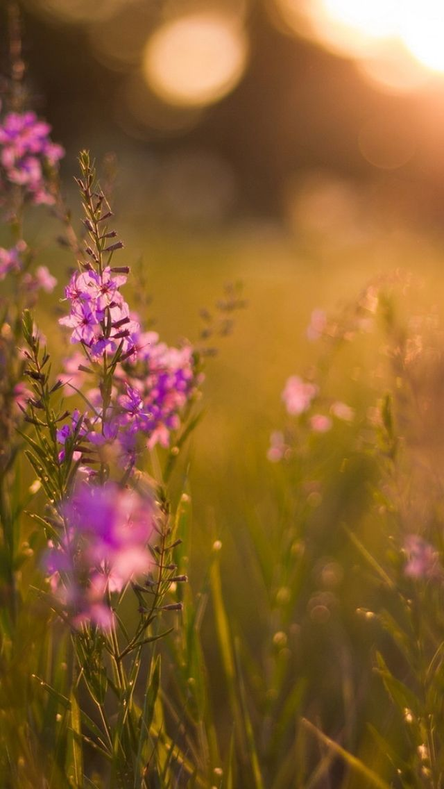 Colourful Iphone X Wallpaper Purple Flowers Iphone 5s Wallpaper Download Iphone