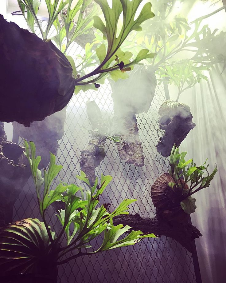 Plants in the mist
