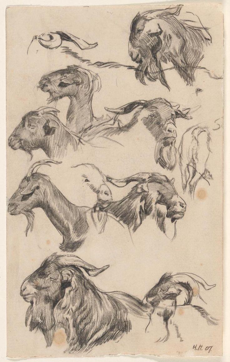 Hans Heysen - Study of goats