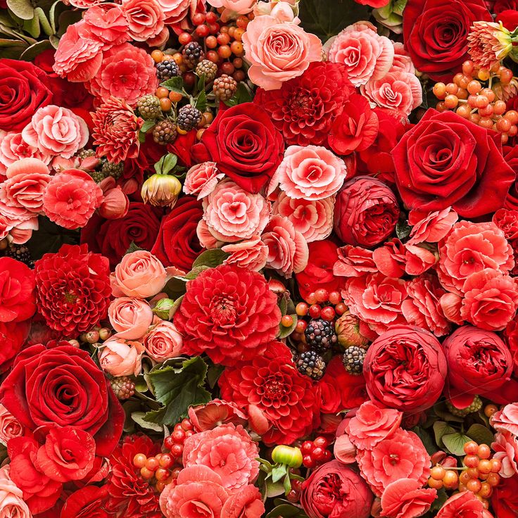 Roses, rose, roses, the most beautiful flower there is!