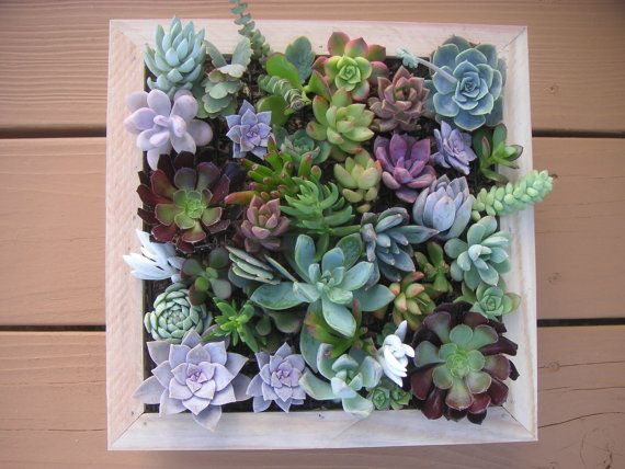Nice Complete Succulent Wall Art Kit, Comes With 25 Cuttings, Moss And Soil,  Fathers Day Gift