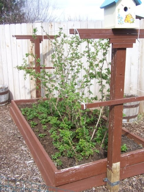 A bed for raspberries at Annies Kitchen Garden