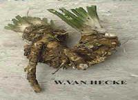 Met zelfgemaakte kruidendrankjes de winter tegemoet heksendrankjes