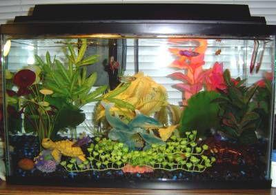 Beautiful Colorful Betta Sorority Tank If You Decide To