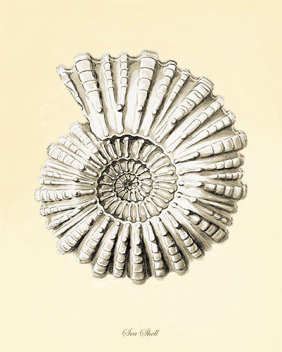 Seashell art print poster Ocean Decor beach art by AntiqueWallArt