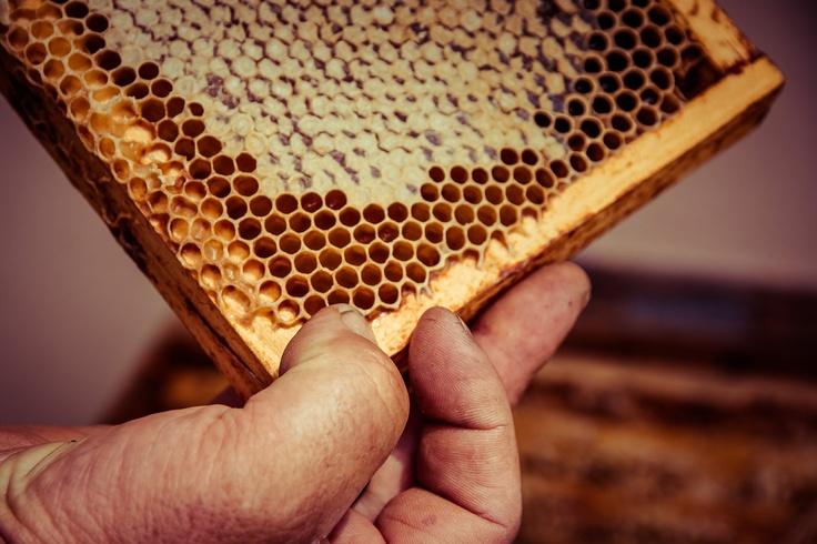 Il prezioso lavoro delle api - Die kostbare Arbeit der Bienen (Fattoria didattica / Didaktischer Bauernhof Monti e Cielo- Spera)