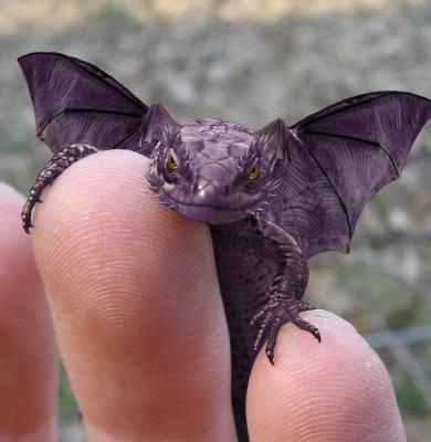 "This is a ""Purple Horned Winged Lizard""....he looks like a mini dragon."