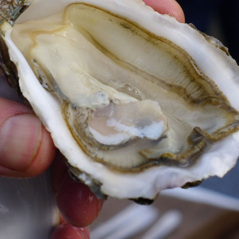 Epicerie fine - Les huîtres de Bretagne.    Face à la Manche, au nord de la Bretagne, la baie de St Brieuc… A quelques encablures de l'Ile de Bréhat grandissent les huîtres de pleine mer. Ces fameux mollusques marins riches en iode et en protéines, pauvres en calories font le délice, depuis des millénaires, de nombreux gastronomes.