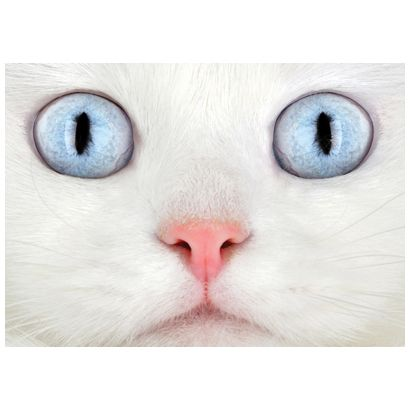Cats Eyes #postcards