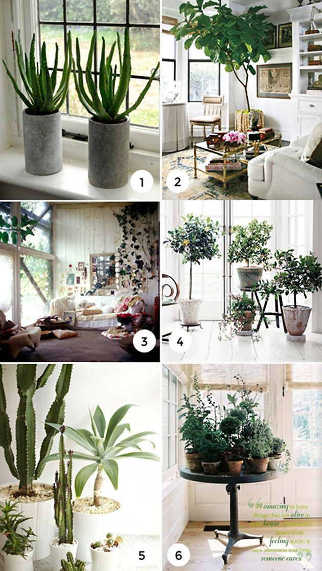 17 best ideas about best plants for bedroom on pinterest plants indoor bedroom themes and - Indoor plant for bedroom ...