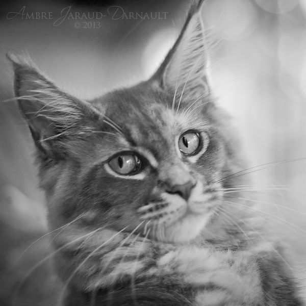 """""""A cat's got her own opinion of human beings, she don't say much but you can tell enough to make you anxious not to hear the whole of it """" --Jerome K Jerome"""