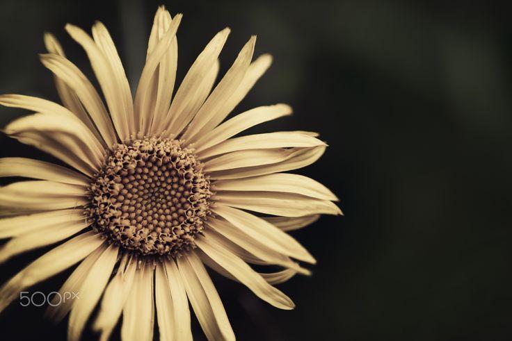 Flower - null