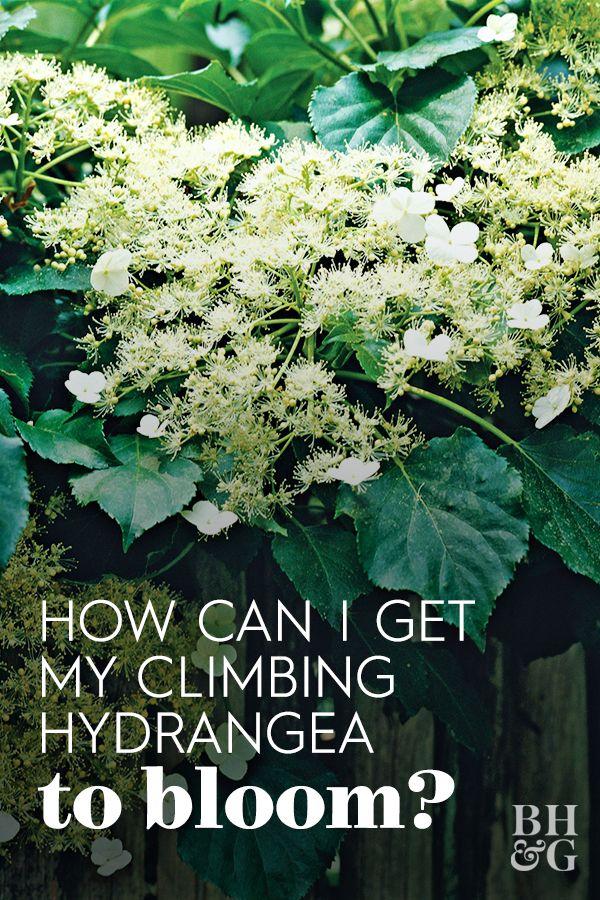 31d7a143a35b972435bfd6ccff4c0e0c - How To Take Hydrangea Cuttings Gardeners World