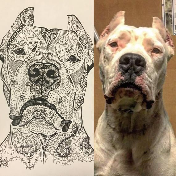Custom Dogo Argentino Ink Portrait Dogo Argentino Pictures To Draw Abstract Portrait