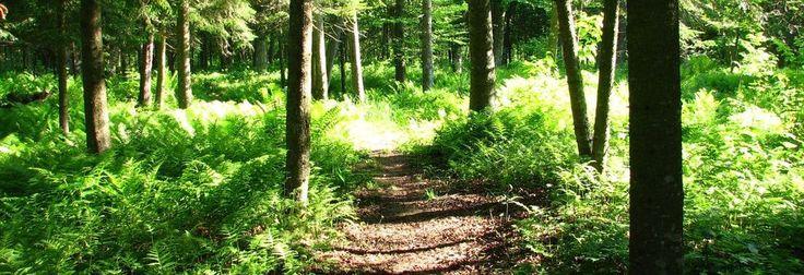 Sentier de la rivière Osgood au parc municipal de#kinnearsmills