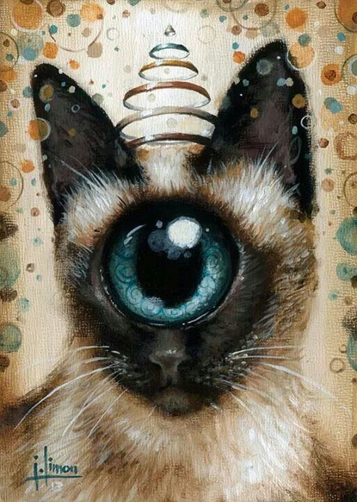 Made by: Jason limon , Cat with One Eye (Cyclops Cat)