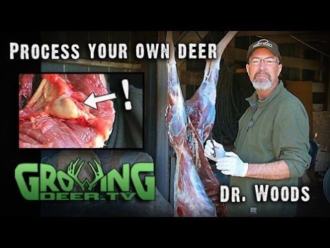In this short video Dr. Woods shares the way he cuts up a deer to easily process venison at home. After many years and hundreds (perhaps even thousands) of d...