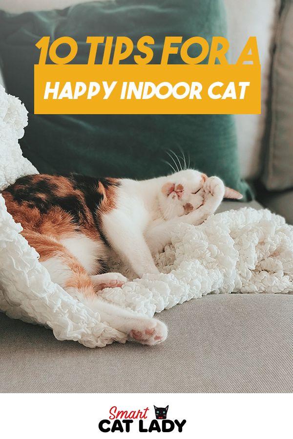 10 Tips for A Happy Indoor Cat