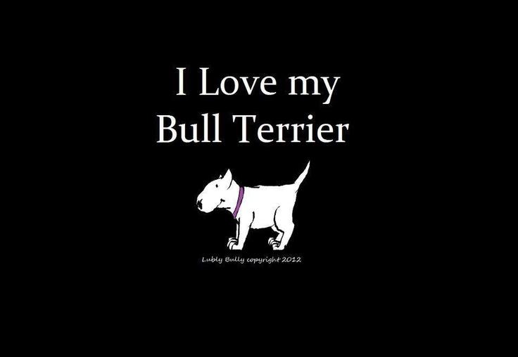 I love my #Bull #Terrier :-)