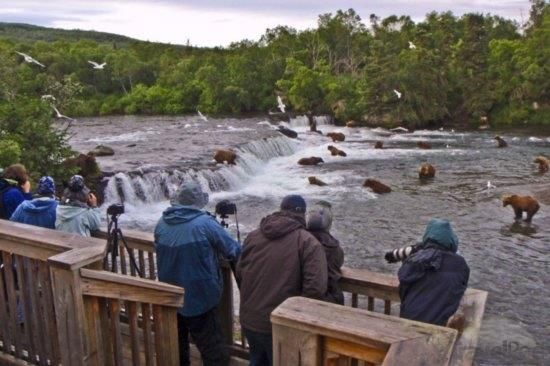 Bears in Katmai National Park #Alaska. People stand on these platforms, and bears  can go under them.
