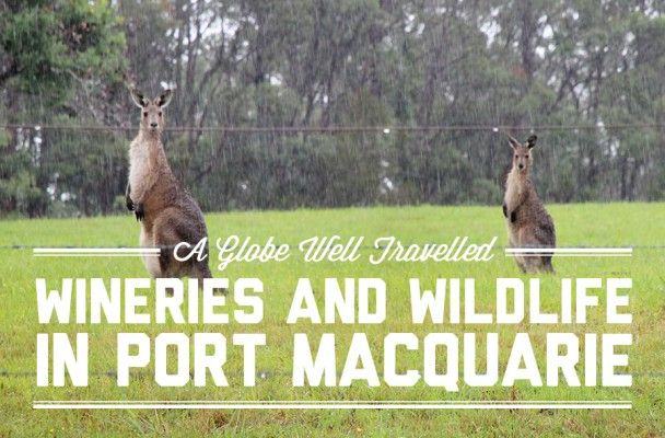 Wineries and wildlife in Port Macquarie