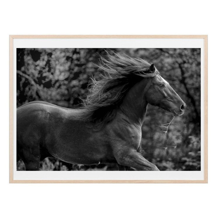 FINE ART LIBERTY EQUESTRIAN PHOTOGRAPHS PRINTED WITH ARCHIVAL INKS ON PREMIUM 305 GSM ARCHIVAL COTTON RAG PAPER. EACH PRINT IS OF A LIMITED EDITION OF 250 AND HAND SIGNED BY THE ARTIST