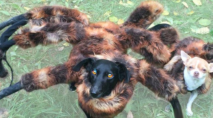 Vorig jaar verscheen een video van een prank met een als monster verklede hond. En die deed het zo goed dat er nu een deel 2 is voor Halloween.