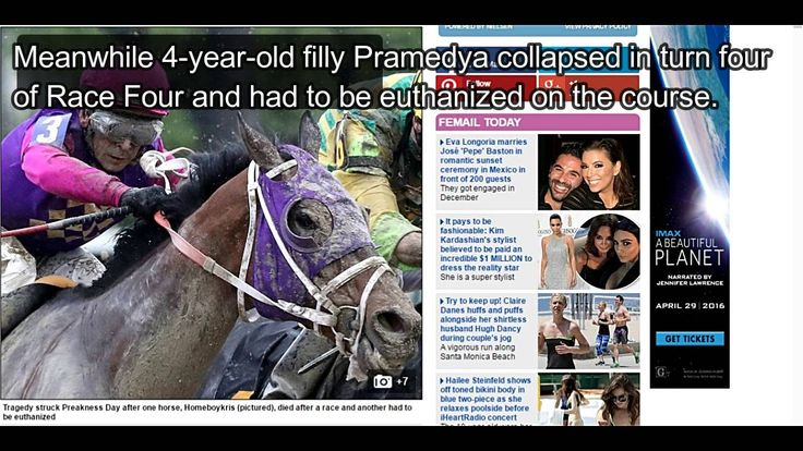 Preakness 2016: Tragedy strikes at rain soaked Preakness as two horses d...
