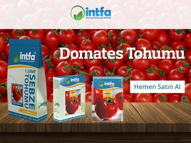 Domates tohumu ekimi hakkında öğrenmek istediklerinizi yazımızda bulabilirsiniz ayrıca domates tohumu çeşitlerimiz için sitemizi ziyaret edebilirsiniz.