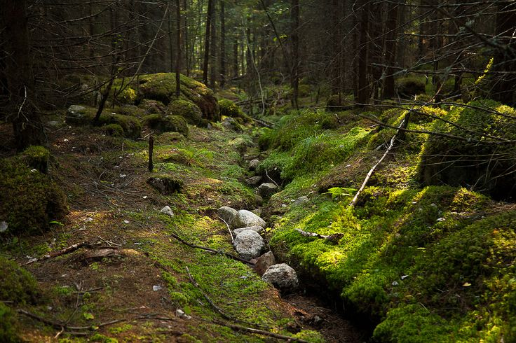 Repovesi national park | Flickr - Photo Sharing!