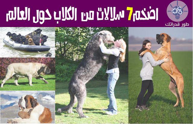 باختلاف الحجم واللون تتنوع الكلاب حول العالم كما يتنوع الهدف من اقتناءها ابتداءا من الحراسة والصيد وأنتهاءا الى اتخاذها كحيوانات اليف Animals Horses