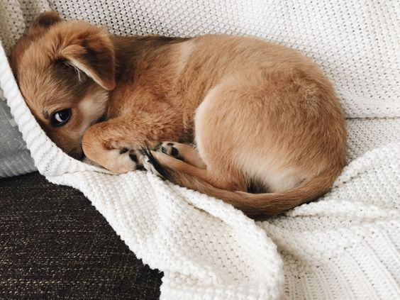 "Too cute for words! hannaoliviaway via jrdnnwlkr on Tumblr ""My sweet sweet baby Roo."""