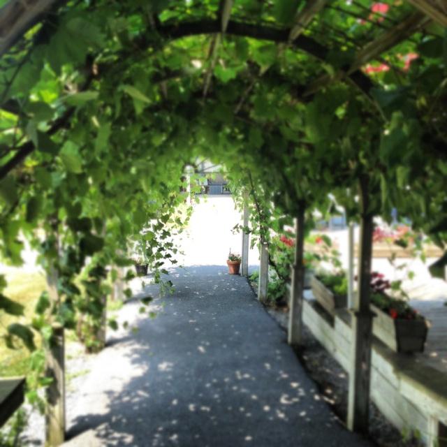Knapp Winery (Finger Lakes)Cayuga Lakes, Favorite Wineries, Destinations Wineries, Fingers Lakes, Wineries Fingers, Knapp Wineries, Finger Lakes, Catskill Real, Kelly Places