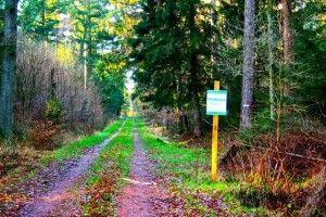 Sonntags-Spaziergang durch die bunte Winter-Natur-Landschaft.