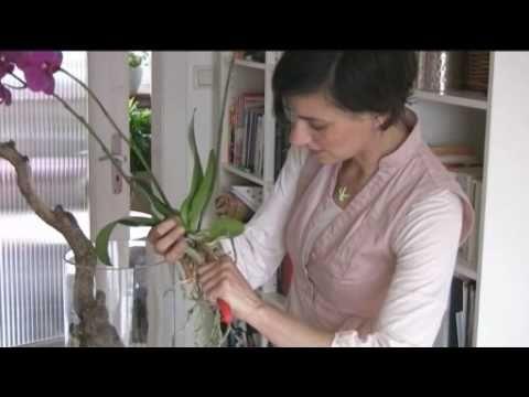 Orchideen - Raus aus dem Topf und ab auf den Ast