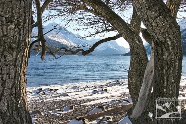 Shop all the gorgeous photography now!     Mountain Lake Winter, Waterton Photographic Print - Images from Alberta, CA