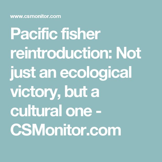Pacific fisher reintroduction: Not just an ecological victory, but a cultural one - CSMonitor.com