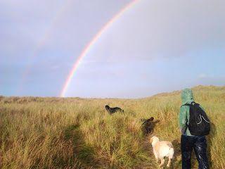Dog walks: Bull Island double rainbow | A dog's paw