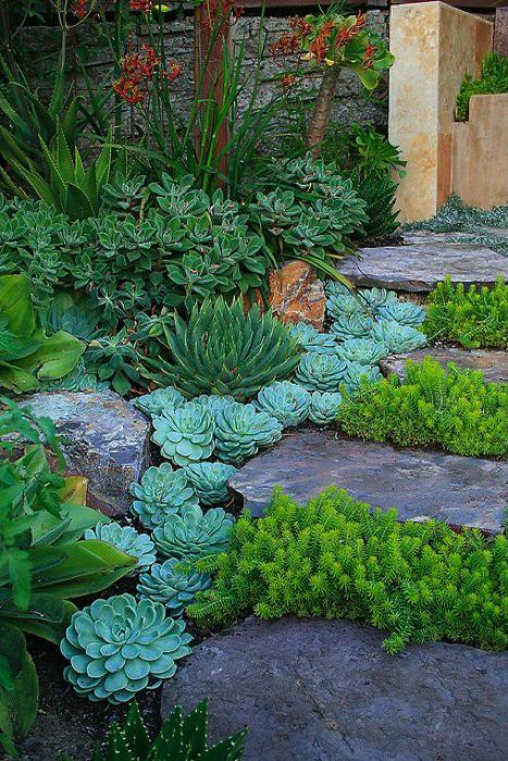 Succulents planted as step edging: Echevaria, Aloe polyphylla, Sedum rupestre Angelina.