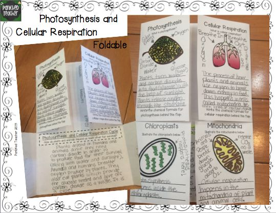 ap biology cellular respiration and photosynthesis essays Three paragraph essay/letter giving evidence of life on mars based on science case  cell respiration and photosynthesis exam:  ap bio - final review ap biology .