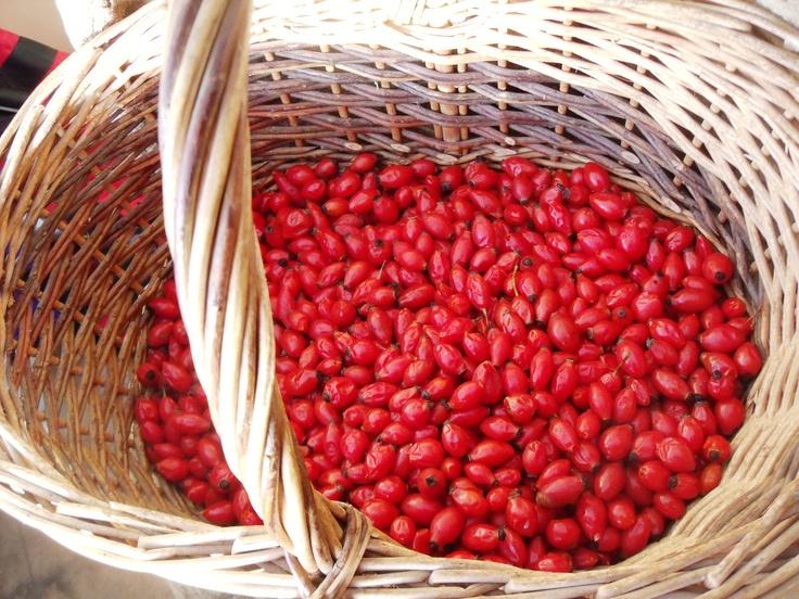 Basket full of freshly foraged rosehips