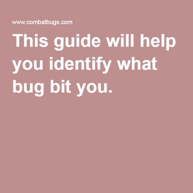 How To Identify Common Bug Bites