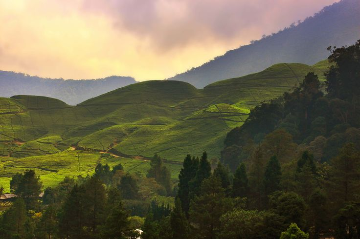 Walk around Puncak's tea plantation and Cibodas botanical gardens to discover the fragrant native flowers of Indonesia, or venture out to the Taman Safari zoo gardens for a close-and-personal experience with exotic animals. Also of interest is the historical presidential palace at Cipanas, located only one kilometer from the resort. more info http://www.novushotels.com