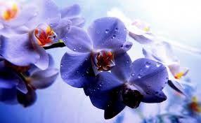 """Képtalálat a következőre: """"virágok,tájak"""""""